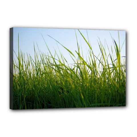 Grass Canvas 18  X 12  (framed) by Siebenhuehner