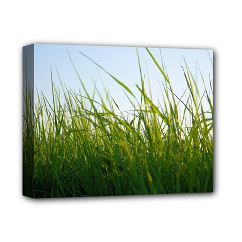Grass Deluxe Canvas 14  X 11  (framed) by Siebenhuehner