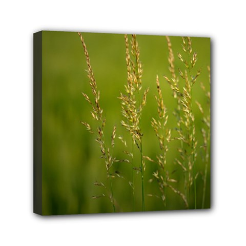 Grass Mini Canvas 6  X 6  (framed) by Siebenhuehner