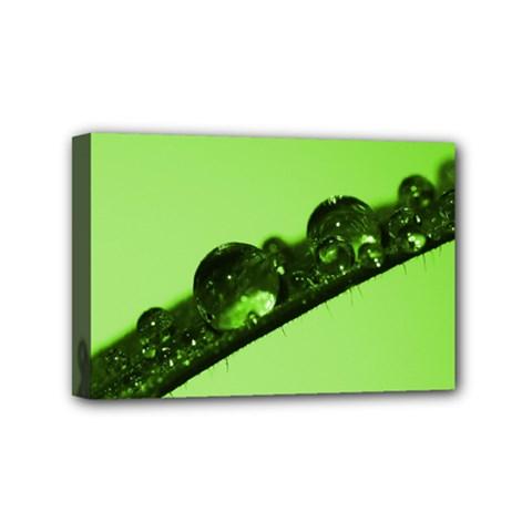 Green Drops Mini Canvas 6  X 4  (framed) by Siebenhuehner