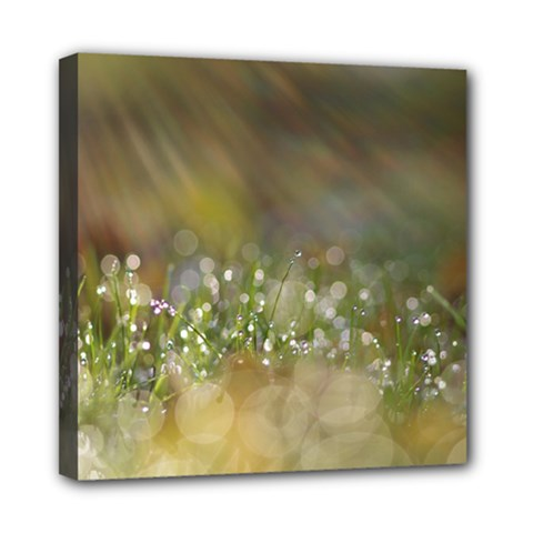 Sundrops Mini Canvas 8  X 8  (framed) by Siebenhuehner