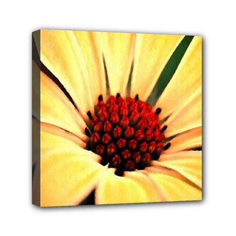 Osterspermum Mini Canvas 6  X 6  (framed) by Siebenhuehner