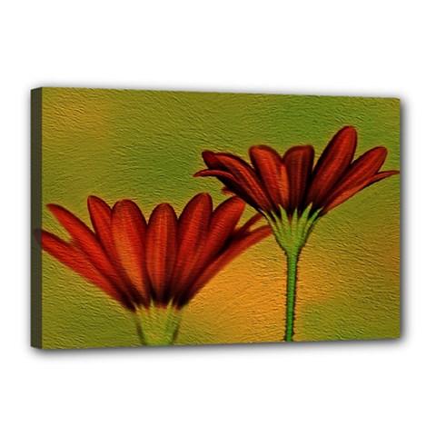 Osterspermum Canvas 18  X 12  (framed) by Siebenhuehner