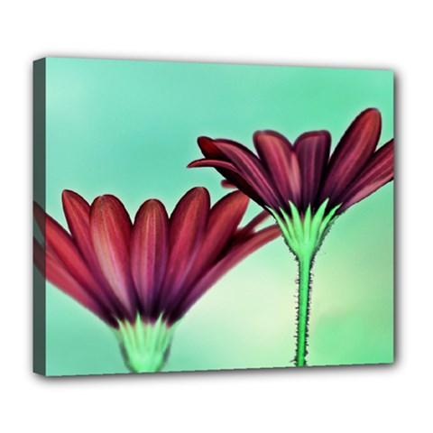 Osterspermum Deluxe Canvas 24  X 20  (framed) by Siebenhuehner