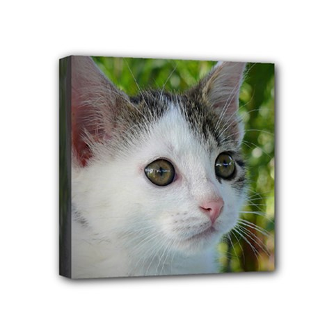 Young Cat Mini Canvas 4  X 4  (framed) by Siebenhuehner