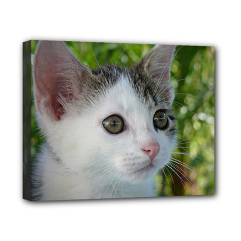 Young Cat Canvas 10  X 8  (framed) by Siebenhuehner