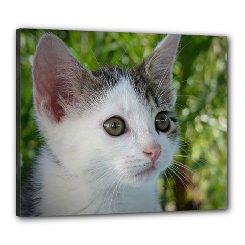 Young Cat Canvas 24  X 20  (framed) by Siebenhuehner
