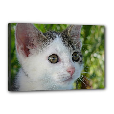 Young Cat Canvas 18  X 12  (framed) by Siebenhuehner