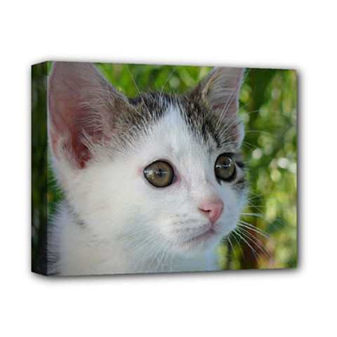 Young Cat Deluxe Canvas 14  X 11  (framed)