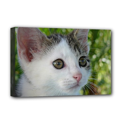 Young Cat Deluxe Canvas 18  X 12  (framed)