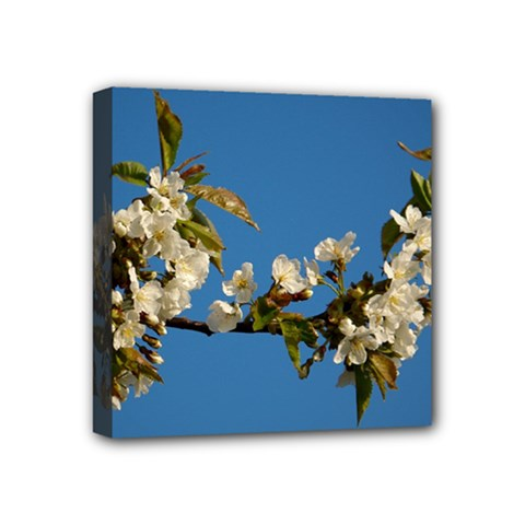 Cherry Blossom Mini Canvas 4  X 4  (framed) by Siebenhuehner