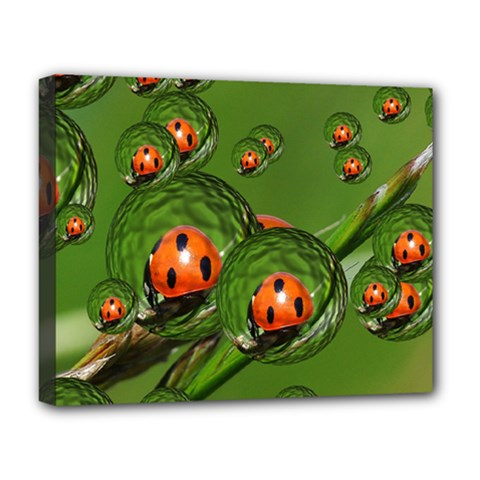 Ladybird Deluxe Canvas 20  X 16  (framed)