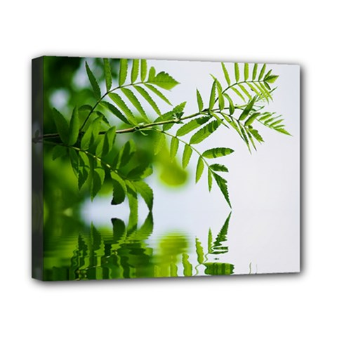 Leafs With Waterreflection Canvas 10  X 8  (framed) by Siebenhuehner