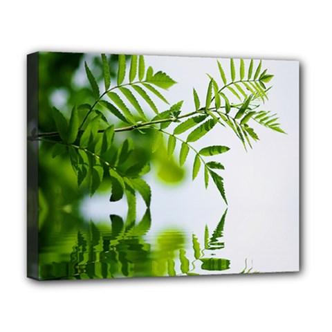 Leafs With Waterreflection Deluxe Canvas 20  X 16  (framed) by Siebenhuehner