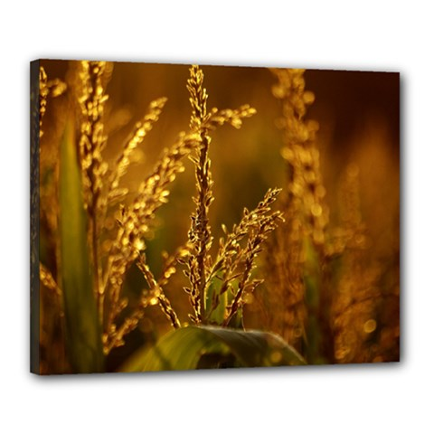 Field Canvas 20  X 16  (framed) by Siebenhuehner