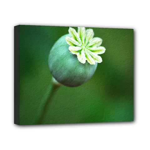 Poppy Capsules Canvas 10  X 8  (framed) by Siebenhuehner