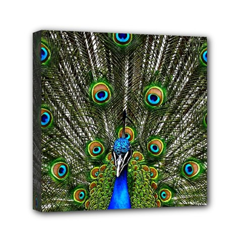 Peacock Mini Canvas 6  X 6  (framed) by Siebenhuehner