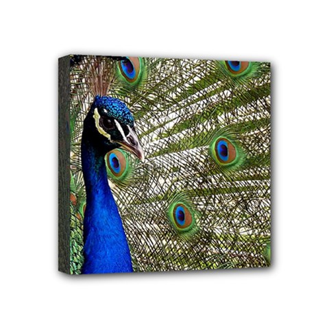 Peacock Mini Canvas 4  X 4  (framed)