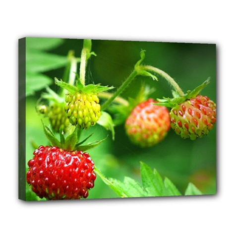 Strawberry  Canvas 14  X 11  (framed) by Siebenhuehner