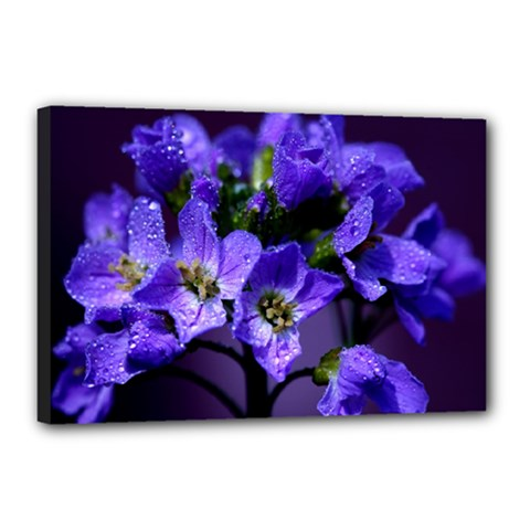 Cuckoo Flower Canvas 18  X 12  (framed)