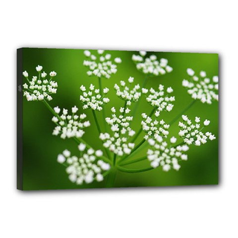 Queen Anne s Lace Canvas 18  X 12  (framed) by Siebenhuehner