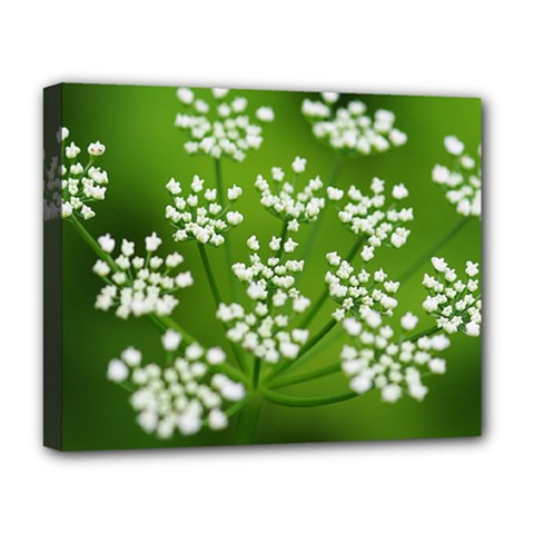 Queen Anne s Lace Deluxe Canvas 20  X 16  (framed) by Siebenhuehner