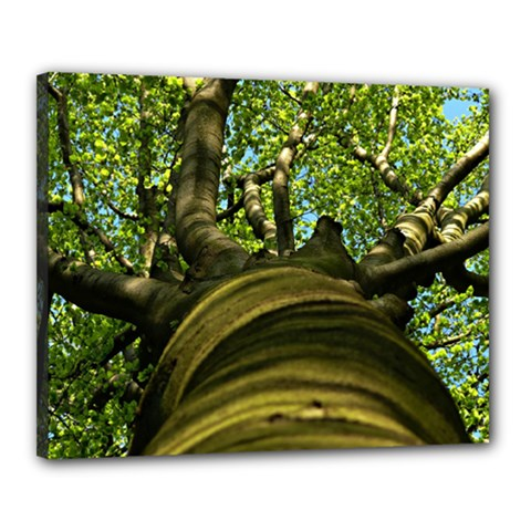 Tree Canvas 20  X 16  (framed) by Siebenhuehner