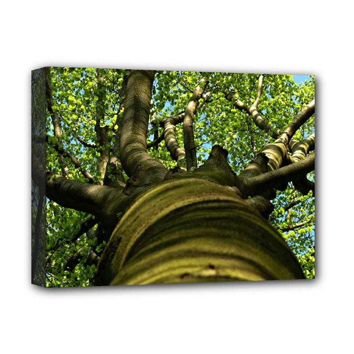 Tree Deluxe Canvas 16  x 12  (Framed)