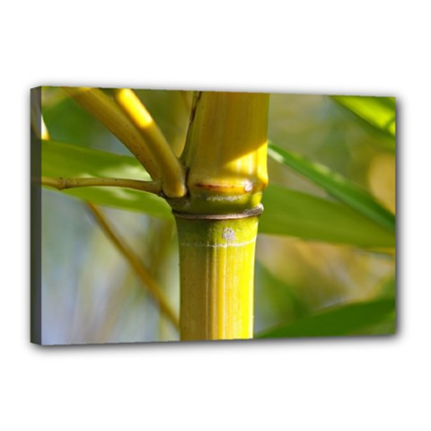 Bamboo Canvas 18  X 12  (framed) by Siebenhuehner