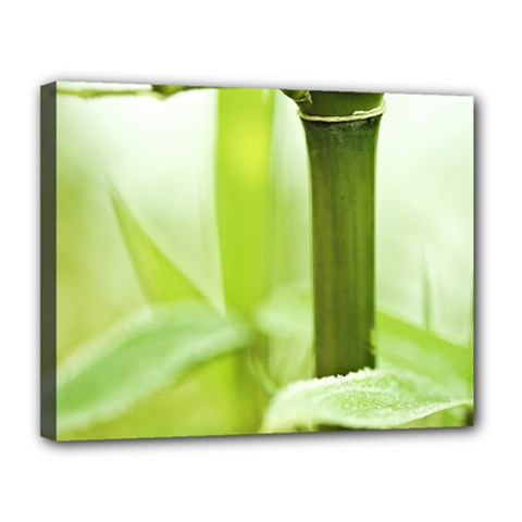 Bamboo Canvas 14  x 11  (Framed)