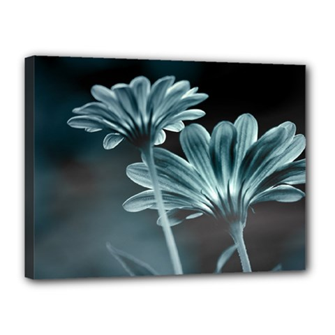 Osterspermum Canvas 16  X 12  (framed) by Siebenhuehner