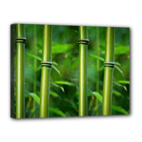 Bamboo Canvas 16  X 12  (framed) by Siebenhuehner