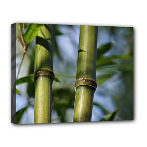 Bamboo Canvas 14  X 11  (framed) by Siebenhuehner