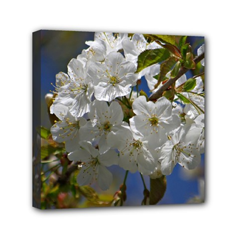 Cherry Blossom Mini Canvas 6  x 6  (Framed) by Siebenhuehner