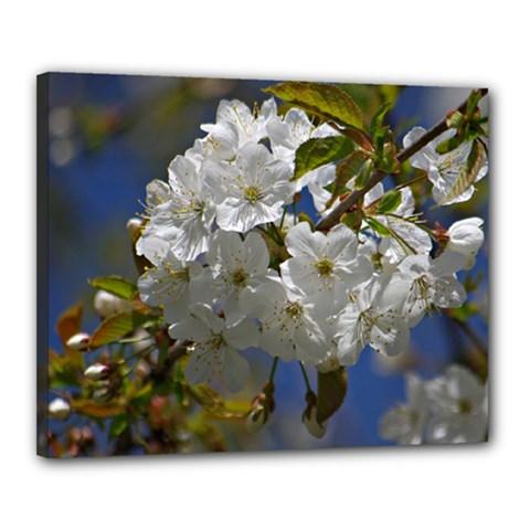 Cherry Blossom Canvas 20  X 16  (framed) by Siebenhuehner