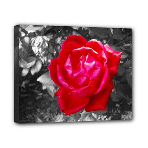 Red Rose Canvas 10  X 8  (framed) by jotodesign