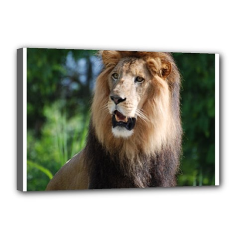 Regal Lion Canvas 18  X 12  (framed) by AnimalLover