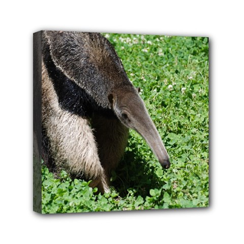 Giant Anteater Mini Canvas 6  X 6  (framed)