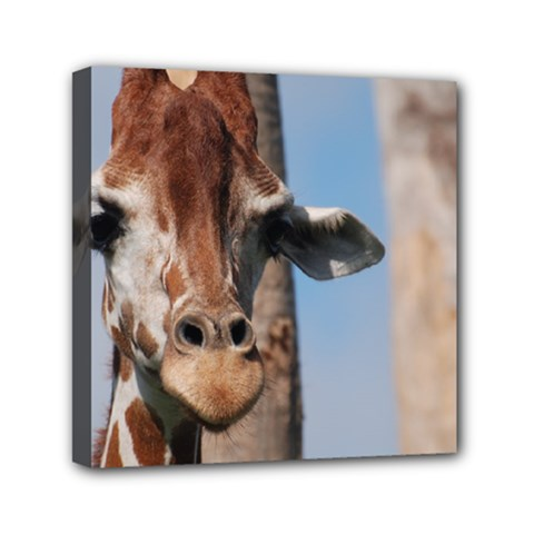 Cute Giraffe Mini Canvas 6  X 6  (framed)