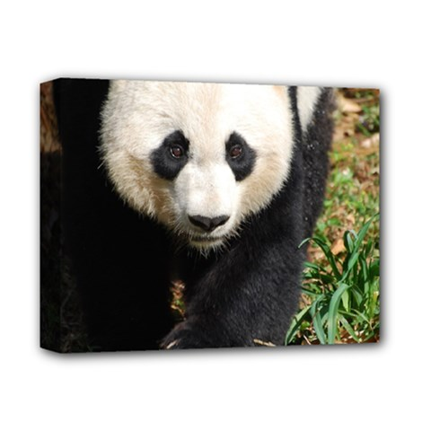 Giant Panda Deluxe Canvas 14  X 11  (framed) by AnimalLover