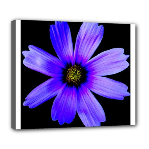 Purple Bloom Deluxe Canvas 24  X 20  (framed) by BeachBum