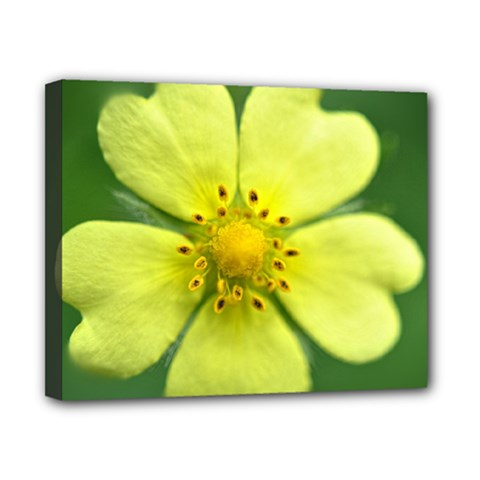 Yellowwildflowerdetail Canvas 10  X 8  (framed) by bloomingvinedesign