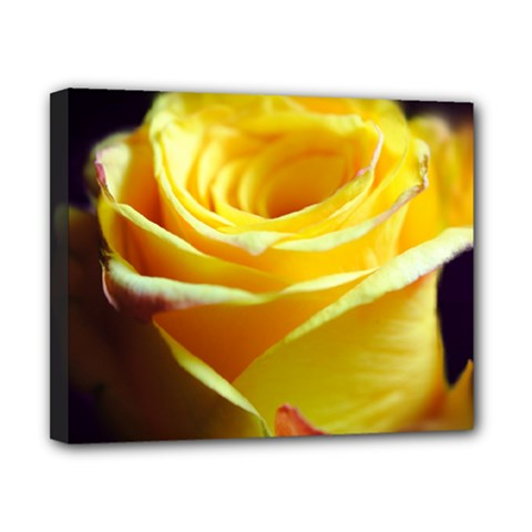 Yellow Rose Curling Canvas 10  X 8  (framed) by bloomingvinedesign