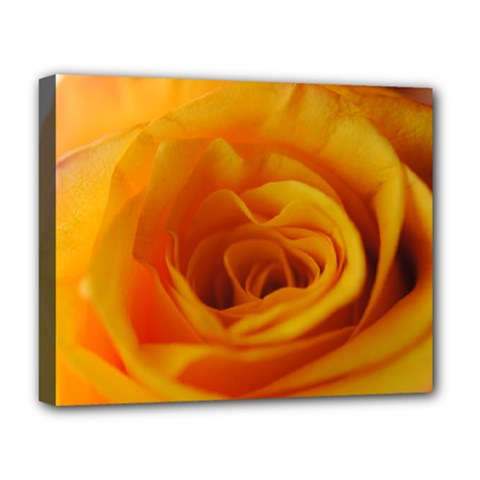 Yellow Rose Close Up Deluxe Canvas 20  x 16  (Framed) by bloomingvinedesign