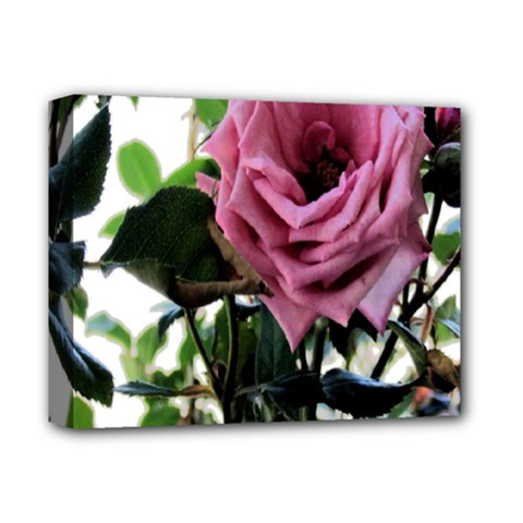 Rose Deluxe Canvas 14  X 11  (framed) by Rbrendes