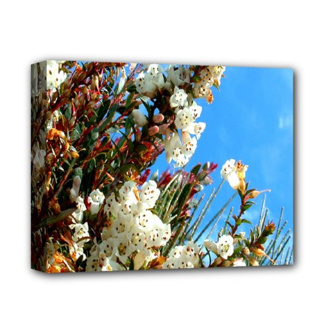 Australia Flowers Deluxe Canvas 14  X 11  (framed) by Rbrendes