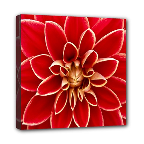 Red Dahila Mini Canvas 8  X 8  (framed) by Colorfulart23