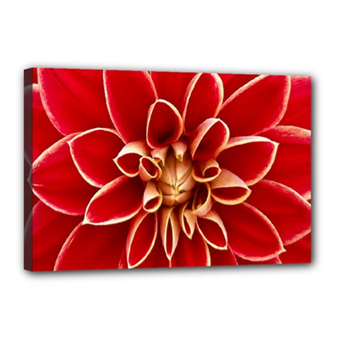 Red Dahila Canvas 18  X 12  (framed) by Colorfulart23