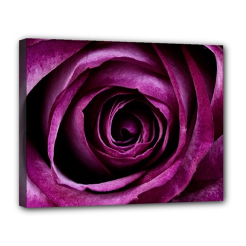 Deep Purple Rose Canvas 14  X 11  (framed) by Colorfulart23