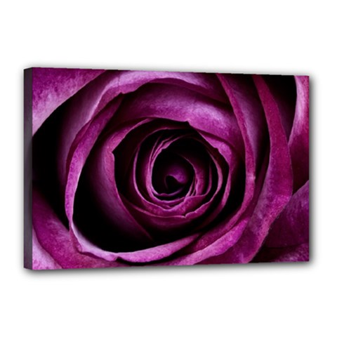 Deep Purple Rose Canvas 18  X 12  (framed) by Colorfulart23
